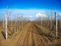 Filas de los árboles frutales Imagen de archivo