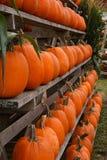 Filas de ofrecimiento de la cosecha abundante de calabazas anaranjadas Imagenes de archivo