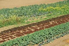 Filas de verdes Foto de archivo libre de regalías