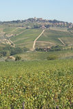 Filas de viñedos y de colinas de Toscana en Italia Imagen de archivo
