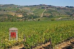 Filas de viñedos y de colinas de Toscana en Italia Imagenes de archivo