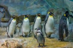 Filas del pingüino Imágenes de archivo libres de regalías