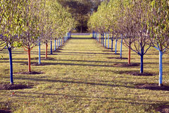 Filas del árbol en el parque Imágenes de archivo libres de regalías