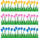 Filas del tulipán Imagen de archivo