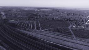 Filas del viñedo antes de cosechar almacen de metraje de vídeo