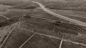 Filas del viñedo y de la carretera