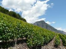 Filas del vino de saillon de Suiza Fotos de archivo libres de regalías