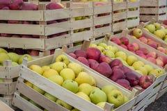 Filas orgánicas frescas de los cajones de las manzanas en el mercado 2 de los granjeros Imagen de archivo