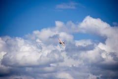 Filatura piana di acrobazia dell'aeroplano di modello Fotografie Stock Libere da Diritti