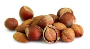 Filbert and almond Stock Photos