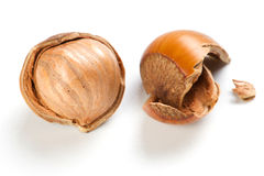 Filbert nut Royalty Free Stock Photography