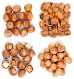 Filbert nut Royalty Free Stock Images