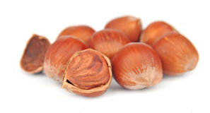 Filbert nuts Royalty Free Stock Images
