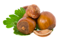 Filbert nuts. And green leaf Royalty Free Stock Images