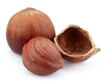 Filbert nuts close up Stock Photos