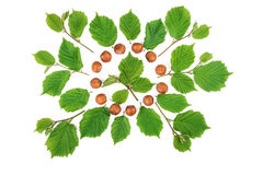 Filbert nuts with green leaves bright pattern on white. Flat lay, top view.  Royalty Free Stock Photos