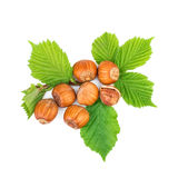 Filbert nuts with leaf Stock Images