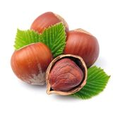 Filbert nuts Stock Images