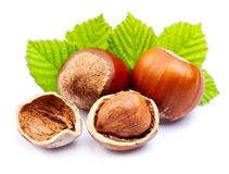 Filbert nuts with leaf Stock Image