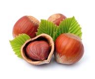 Filbert nuts Royalty Free Stock Photo