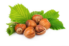 Filbert nuts with leaves on white background Royalty Free Stock Photos