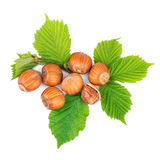 Filbert nuts with leaves on white Royalty Free Stock Photos
