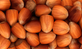 Filbert nuts texture or background Royalty Free Stock Photo