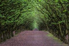 Filbert orchard Stock Photos