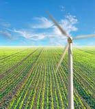 Fild com plantas e moinho das energias eólicas Foto de Stock Royalty Free