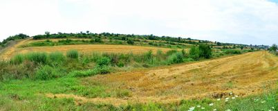 Fild de la agricultura imagen de archivo