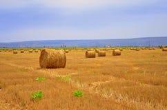 Fild de la agricultura imágenes de archivo libres de regalías