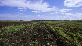 Fild de la agricultura almacen de metraje de vídeo