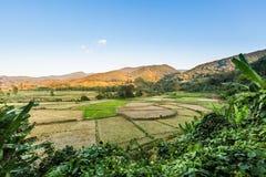 Fild di agricoltura Fotografie Stock Libere da Diritti