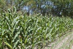 Fild di agricoltura Fotografia Stock Libera da Diritti