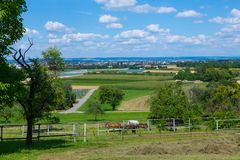 Filderebene with horses and view Stock Images