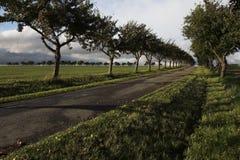 File degli alberi Fotografia Stock