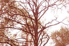 File degli alberi da frutto in primavera Eppure senza foglie fotografie stock
