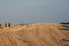 File degli alberi di cipresso italiano e un paesaggio rurale della strada bianca Sie immagini stock libere da diritti