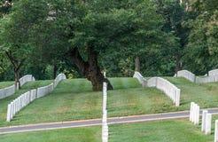 File degli indicatori della lapide nel cimitero di Arlington fotografia stock libera da diritti