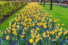 File dei narcisi, delle campanule e dei fiori dei tulipani Fotografie Stock Libere da Diritti