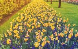 File dei narcisi, delle campanule e dei fiori dei tulipani Immagine Stock Libera da Diritti