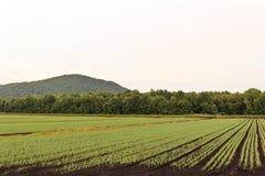 File dei raccolti dell'azienda agricola Fotografie Stock Libere da Diritti