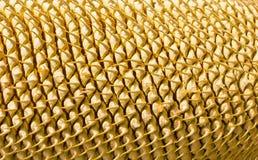 File del primo piano del cono del cycad fotografia stock