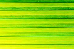 File della foglia verde per fondo immagine stock libera da diritti