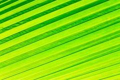 File della foglia verde per fondo immagini stock libere da diritti