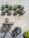 File delle piante di fragola che appendono su una parete in un piccolo patio Fotografie Stock