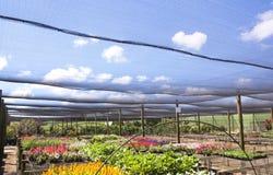 File delle piante di scuola materna brillantemente colorate sotto Shadecloth Fotografia Stock Libera da Diritti