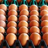 File delle uova in un vassoio di plastica Immagine Stock Libera da Diritti