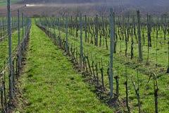 File delle vigne di estate, regione del sud di Moravian, repubblica Ceca immagini stock