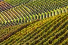 File delle vigne nelle colline fotografia stock